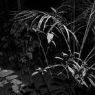 Foreste Plurali. Public Program | Daniel Steegmann Mangrané