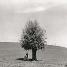Fulvio Roiter, L'uomo e l'albero, 1950 | © Archivio Storico Circolo Fotografico La Gondola Venezia