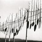 Fulvio Roiter, Senza titolo (mestoli) | © Archivio Storico Circolo Fotografico La Gondola Venezia