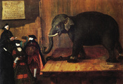 immagine di L'elefante