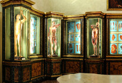 immagine di Musei di Palazzo Poggi