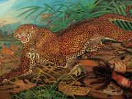 immagine di Leopardo