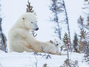 Marco Urso. Signore dell'Artico