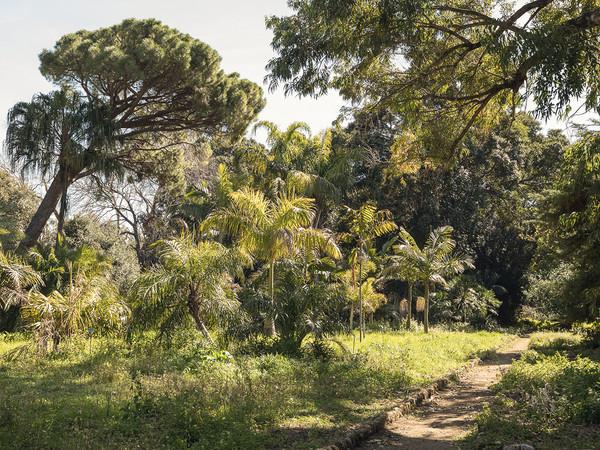 Orto Botanico, Palermo Atlas