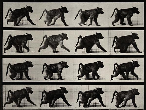 Eadweard Muybridge. Prima del cinema