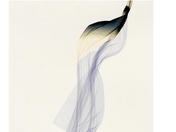 Beatrice Pediconi, Untitled Small #4, 2019 (dettaglio). Emulsion lift on paper, cm. 66x50