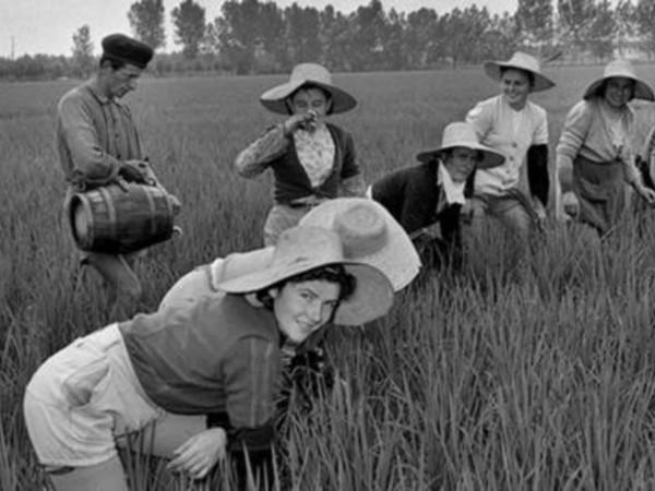 Mondine al lavoro nelle risaie del Vercellese, Lignana (Vc), 1948