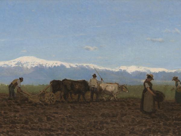 Giuseppe Ciardi, L'aratura (Il lavoro nei campi), 1872, olio su tela, 44x95 cm.