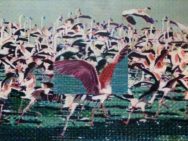 Claudio Cintoli, Flamingos, 1966-67