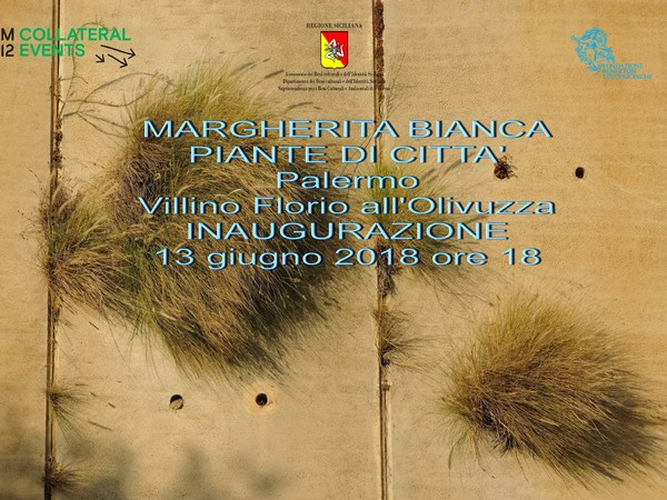 Margherita Bianca. Piante di città, Villino Florio, Palermo