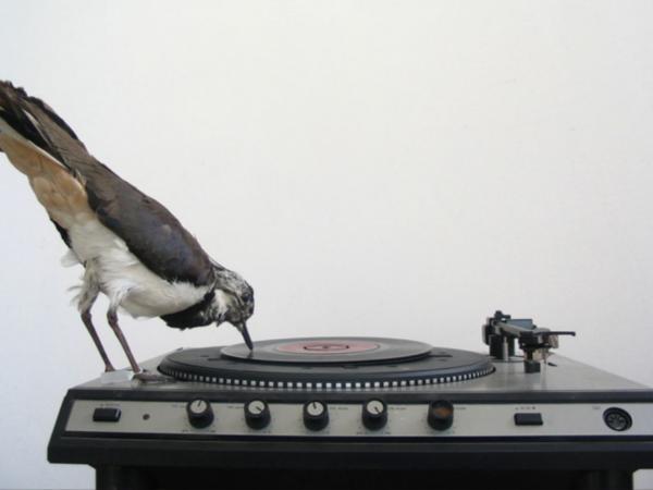 Trenta3 - Speaking in vinyl