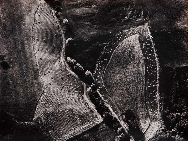 Mario Giacomelli, Le foglie, 390x285 mm | Courtesy of Studio Guastalla Arte Moderna e Contemporanea / The Lone T art space | Foto: Cristian Castelnuovo