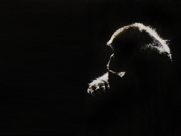 Il monito dolce-amaro delle scimmie di Simone Fugazzotto
