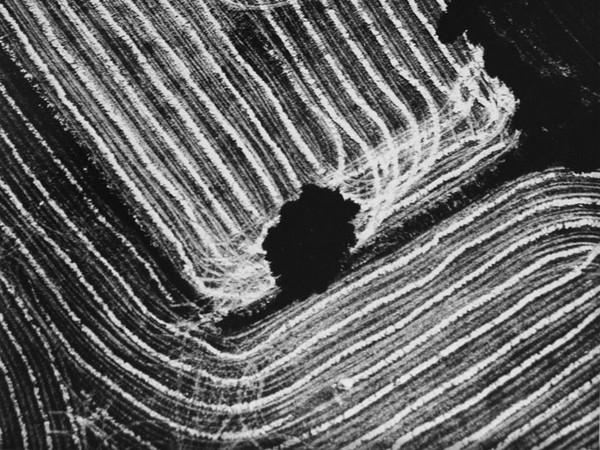 Mario Giacomelli, Presa di coscienza sulla natura, 298x392 mm | Courtesy of Studio Guastalla Arte Moderna e Contemporanea / The Lone T art space | Foto: Cristian Castelnuovo