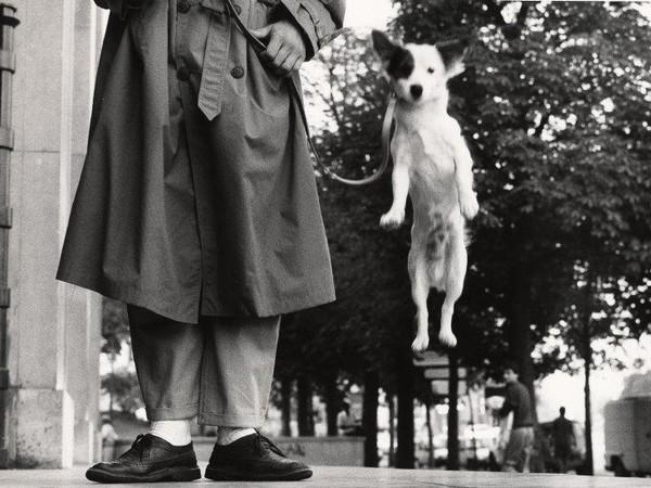 Elliott Erwitt, Paris, France, 1989, dettaglio