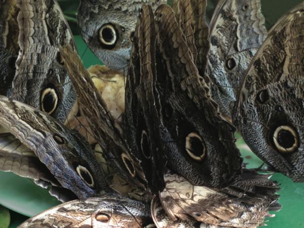 A caccia di novit&agrave; fra le gallerie di Milano &nbsp;<br />