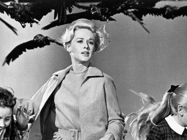 """Dal film """"Uccelli"""" di Alfred Hitchcock"""