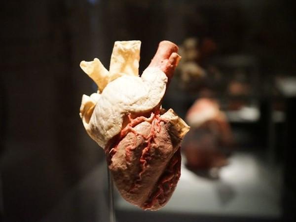 <em>Real Bodies. Human Art Exhibition</em>, Palazzo Zaguri, Venezia