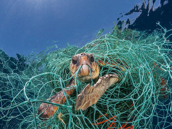 Jordi Chias, Una tartaruga marina impigliata in una vecchia rete da pesca in plastica al largo della Spagna