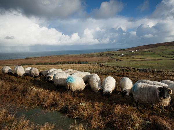 I Céide Fields nei paesaggi irlandesi. Un luogo di storia millenaria lungo un viaggio di ricerca