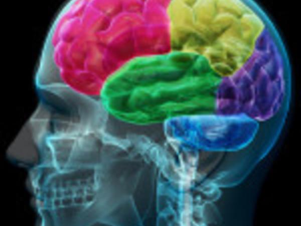 Brain. Il cervello istruzioni per l'uso, Museo Civico di Storia Naturale, Milano