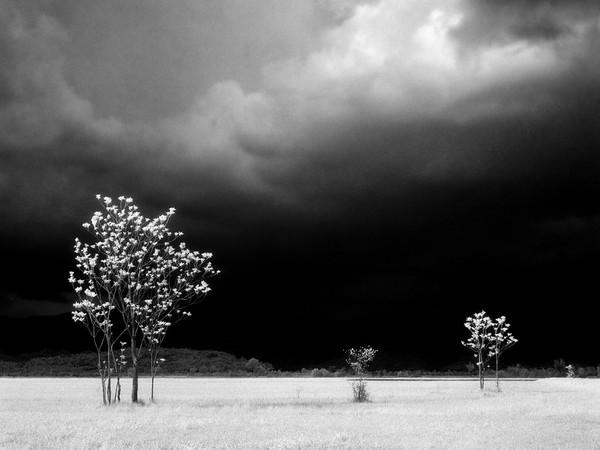 Elio Ciol, Prima del temporale, Lestans, 1963