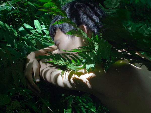 Zheng Bo, Pteridophilia 1, 2016. Video (4K, color, sound), 17 min.