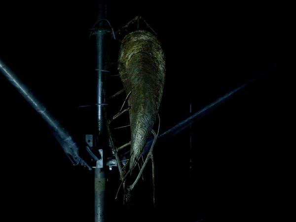 Giorgio Andreotta Calò, Senza titolo (La fine del mondo), 2017 (particolare). Veduta dell'installazione, Padiglione Italia, 57ma Biennale di Venezia, 2017