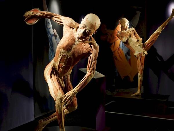 Real Bodies, scopri il corpo umano