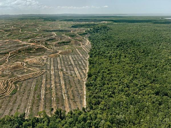 Edward Burtynsky, <em>Clearcut #1, Palm Oil Plantation, Borneo, Malaysia, 2016</em> | Foto © Edward Burtynsky | Courtesy of © Admira Photography, Milan / Nicholas Metivier Gallery, Toronto