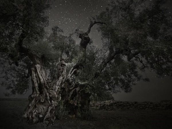 Beth Moon, Monoceros, 2013, stampa al platino palladio, 81x120 cm., dalla serie Diamond Nights
