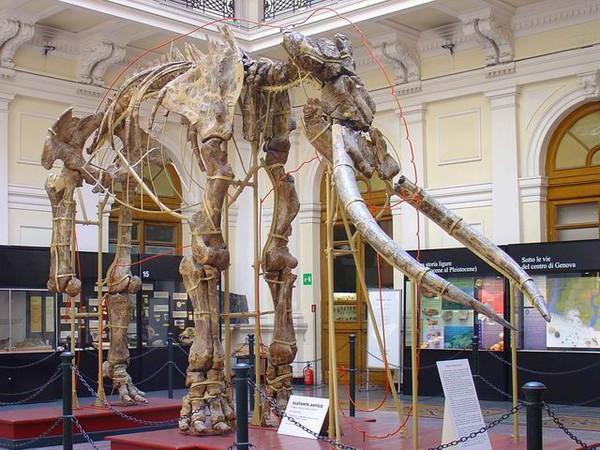 Museo di Storia naturale Giacomo Doria