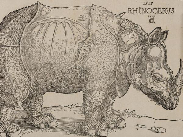 Albrecht Dürer, Rinoceronte, Xilografia, 300 x 215 mm | Courtesy © Musei Civici di Bassano