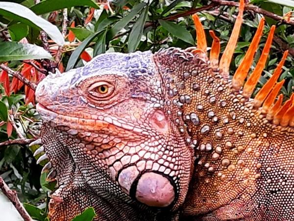 <em>Viaggio nella Natura del Costa Rica: foto, disegni e diari da un'avventura</em>