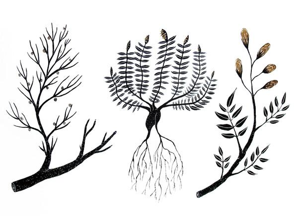 Andreco, Plantae