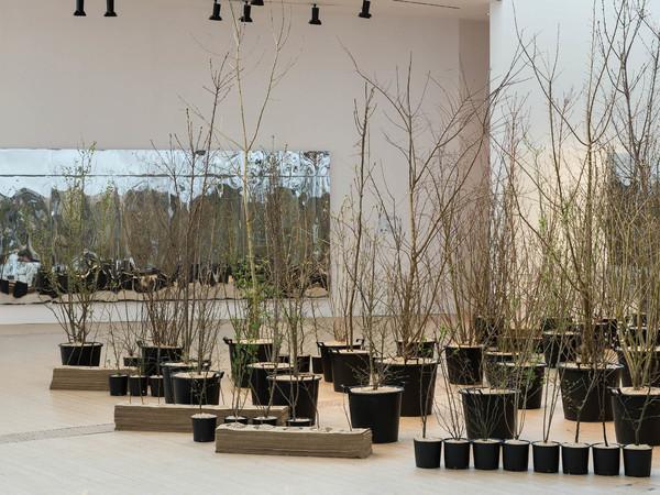 Foresta M9. Un paesaggio di idee, comunità e futuro, M9 - Museo del '900, Venezia Mestre