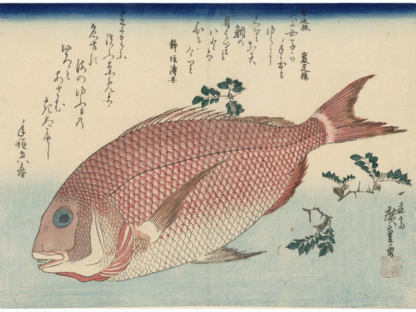 Utagawa Hiroshige, Pagro e pepe nero giapponese, 1832-33 circa, 265x370 mm., silografia policroma. Museum of Fine Arts, Boston. William Sturgis Bigelow Collection