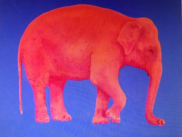 Valentina De Martini, Elefante, olio su tela, cm. 130x130