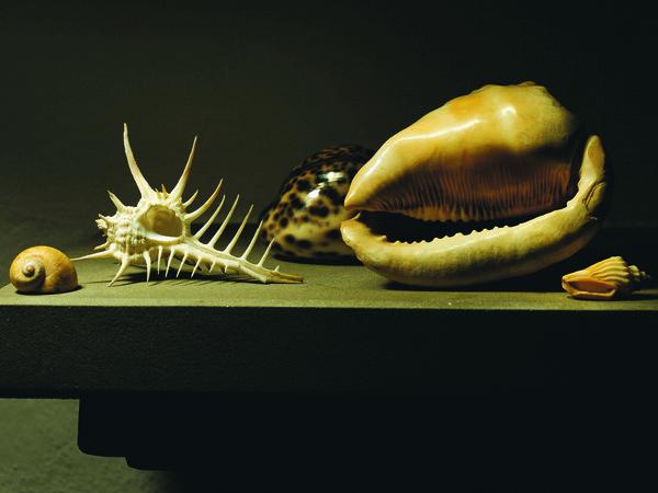 Mauro Davoli, <em>Conchiglie</em>, 2001, 120 x 80 cm | &copy; Mauro Davoli<br />