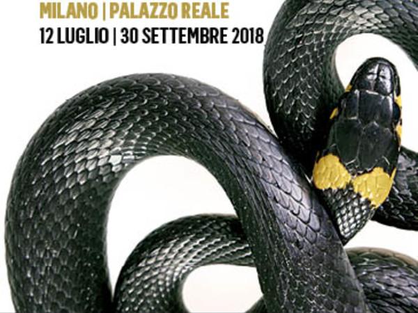 Luxus. Lo stupore della bellezza, Palazzo Reale, Milano