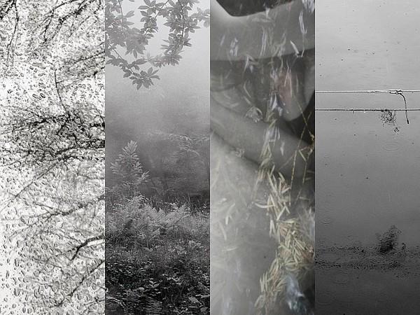 Assonanze, l'inattesa poetica della natura. Piergiuseppe Anselmo, Lorenzo Avico, Riccarda Montenero, Ullic Narducci Morard
