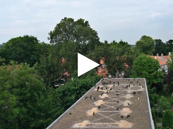 Marinus Boezem, A Volo d'Uccello, installazione sul tetto dello studio dell'artista, Middelburg, 2010