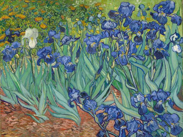 Van Gogh, la meraviglia del colore