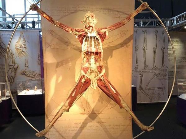Authentic Real Bodies. Leonardo da Vinci, Palazzo Zaguri, Venezia