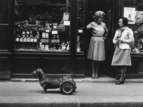 Robert Doisneau, <em>Un chien &agrave; roulettes</em>, 1977 | &copy; Atelier Robert Doisneau&copy; Atelier Robert Doisneau