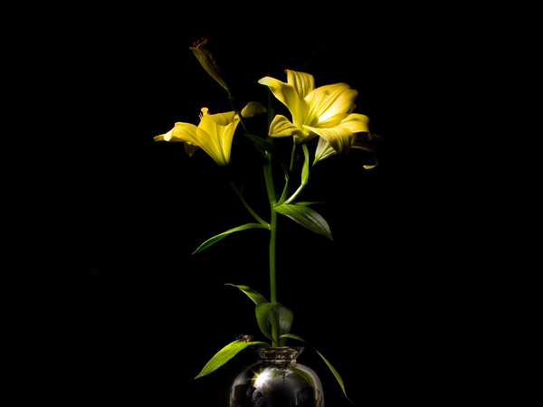 Mauro Davoli, Fiori in un vaso con collana di conchiglie e insetto, 2013, 60 x 60 cm | © Mauro Davoli