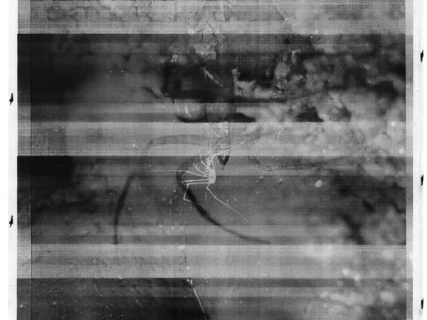 Francesco Surdi, Senza titolo, 2018, stampa laser su carta
