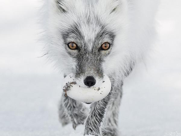 Sergey Gorshkov, Arctic treasure