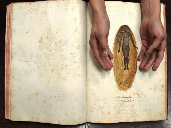Mandragora Ficta. Ulisse Aldrovandi (Bologna, 1522-1605). Biblioteca Universitaria di Bologna