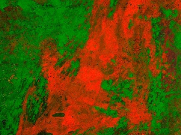 Daniele Innamorato, GREEN-RED (Cellophane series), acrylic on canvas,cm 200x175, 2014